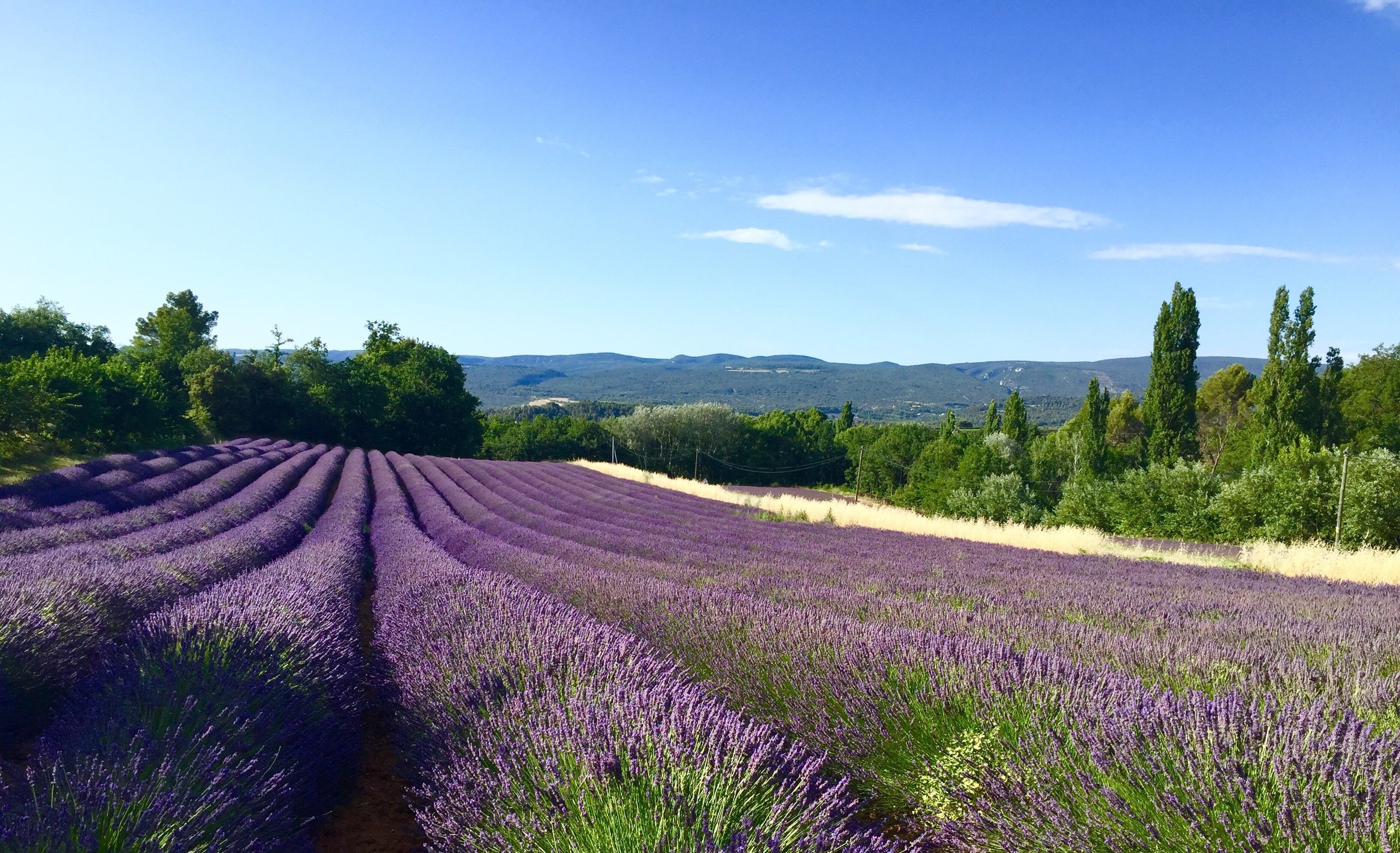 Trip to Provence - in the footsteps of Cezanne and Van Gogh